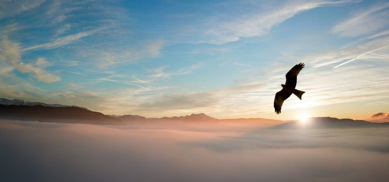 Large bird flying above clouds