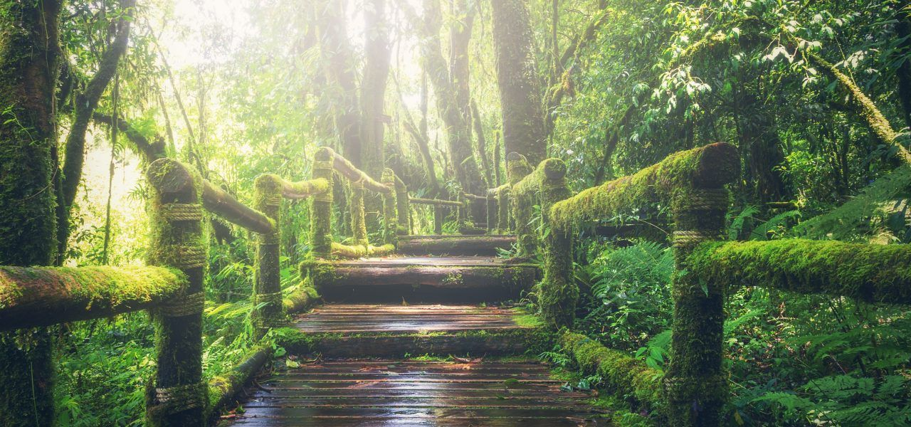 Three green, mossy steps surrounded by forest.
