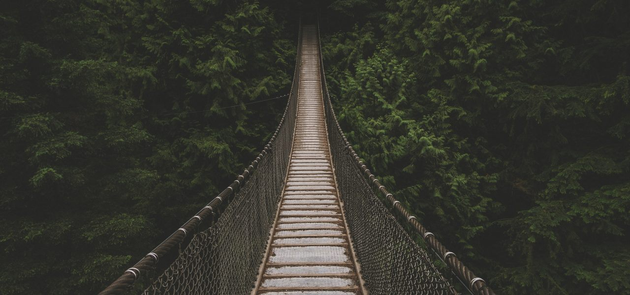 A rope bridge going into trees